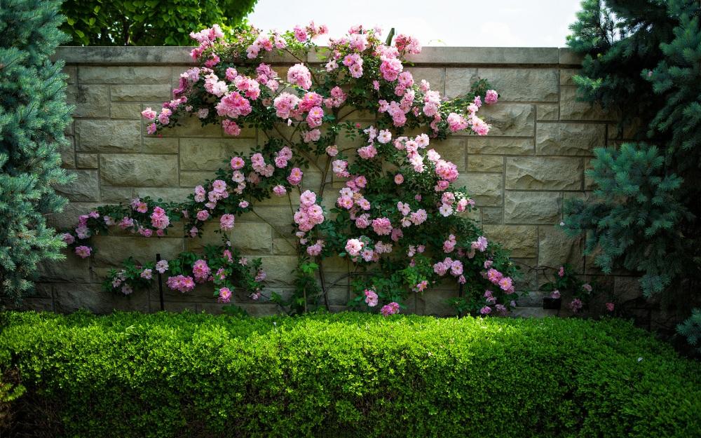 6993301-wall-flowers